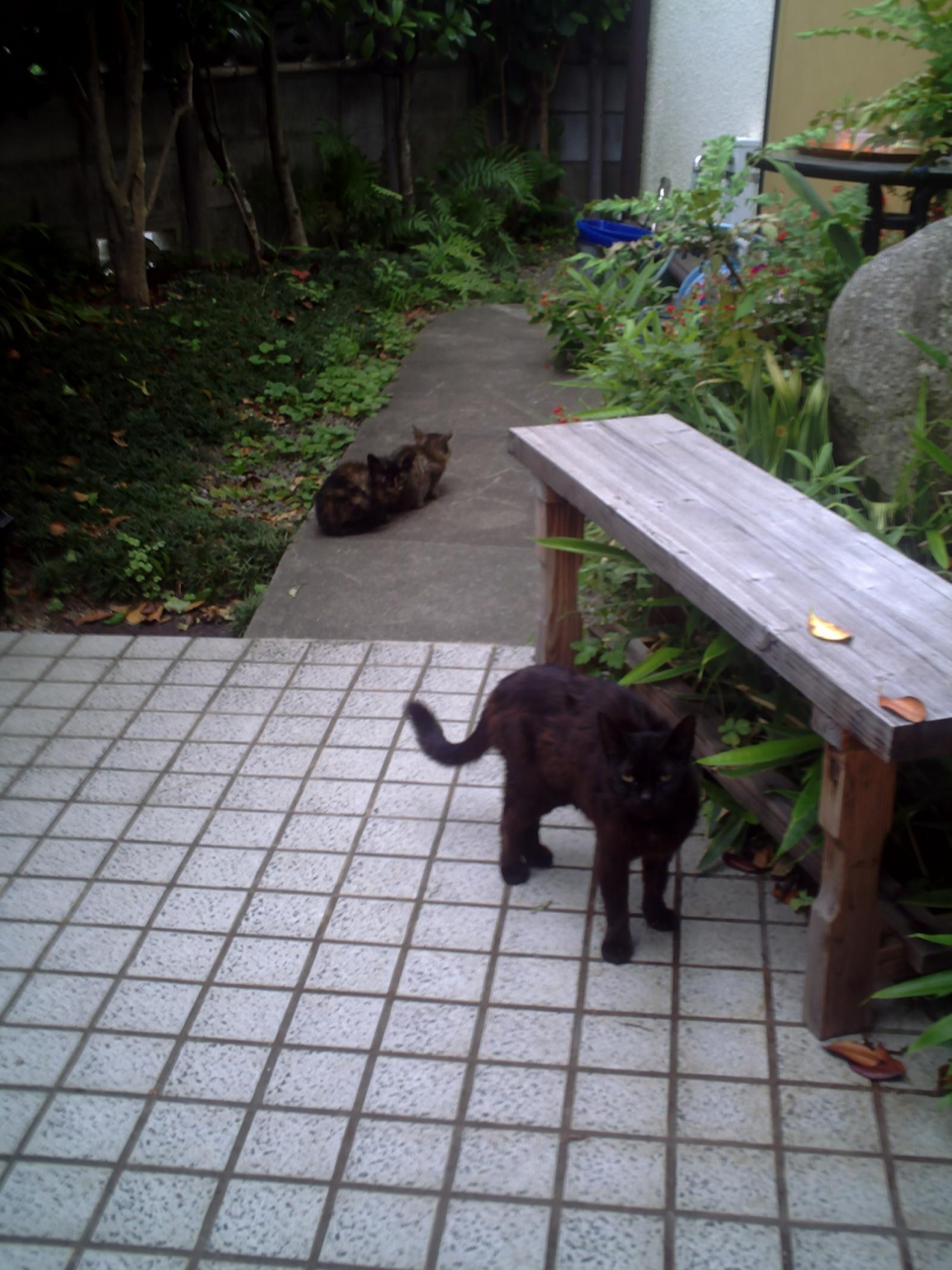と 私 庭 猫 ブログ の